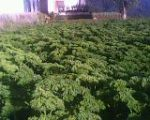 tanmn sayuran di agropolitan (seger2 yach)